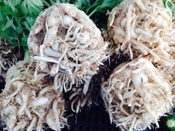 Celery root. Culver City farmers market