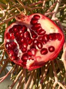 La Cienega farmers market. Pomegranate