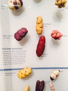 National Geographic: The Future of Food exhibit.