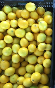 Lemons at the La Cienega Farmers Market