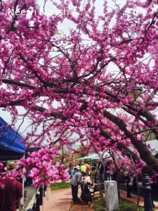 Spring at the Takoma Park Farmers Market
