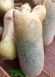Radish in the shape of a foot. Takoma Park Farmers Market