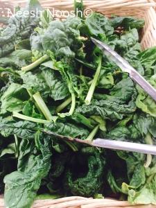 Spinach. Takoma Park Farmers Market