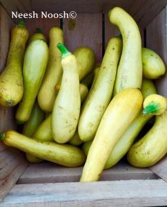 Summer Squash. Potomac Farm Market. Glen Echo, MD