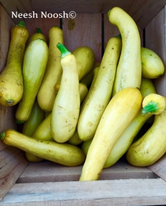 Summer Squash. Potomac Farm Market. Glen Echo, MD